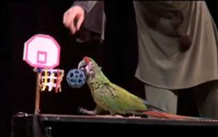 pet comedy show