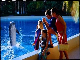 dolphin doing tricks at the habitat
