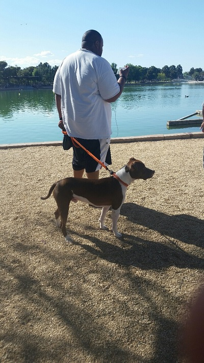 A Dog and His Owner are enjoying a day at Sunset Park. The park is 15 minutes from the Las Vegas Strip