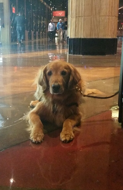 This beautiful dog is relaxing on the cool marble floor at the MGM Shopping Area