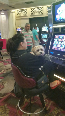 This little guy is playing Slots with His Mother at Flamingo.
