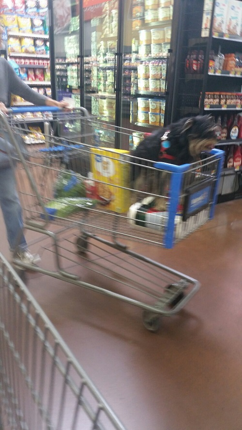 Dog Shopping at Walmart