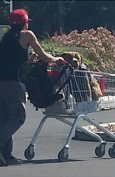 It is not uncommon to see a dog getting a ride in a shopping cart around the Las Vegas area