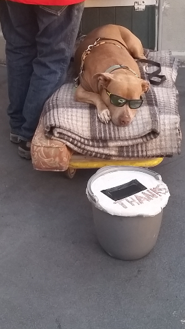 Every Homeless Person will tell You that they get at least twice as many tips with a dog helping them beg