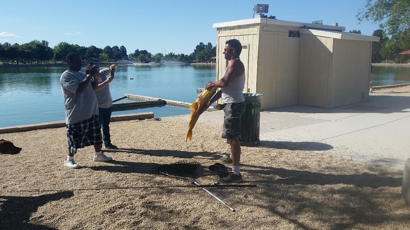 A Thirty Pound Carp is caught and put back in the pond by a local fishermen
