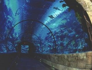 sharks swimming in aquariu
