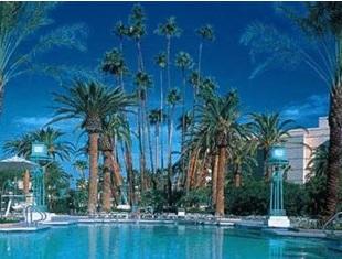 palm trees and dusk sky