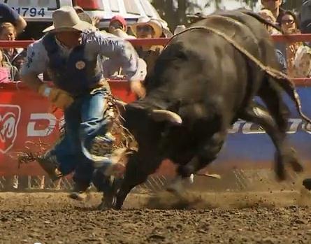 Las Vegas Rodeo Bull Images