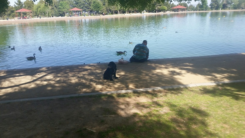 A dog and His Man relax at the Pond
