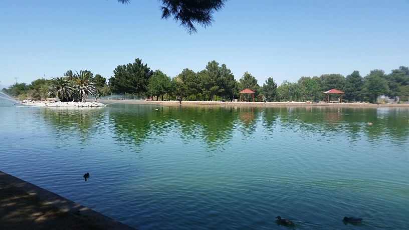 The Pond is 14 acres and is the center piece to the Park