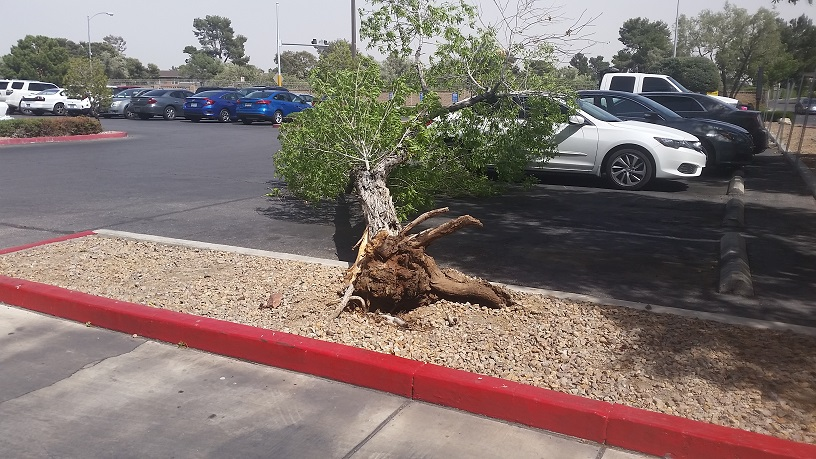 High Winds are very common in Las Vegas